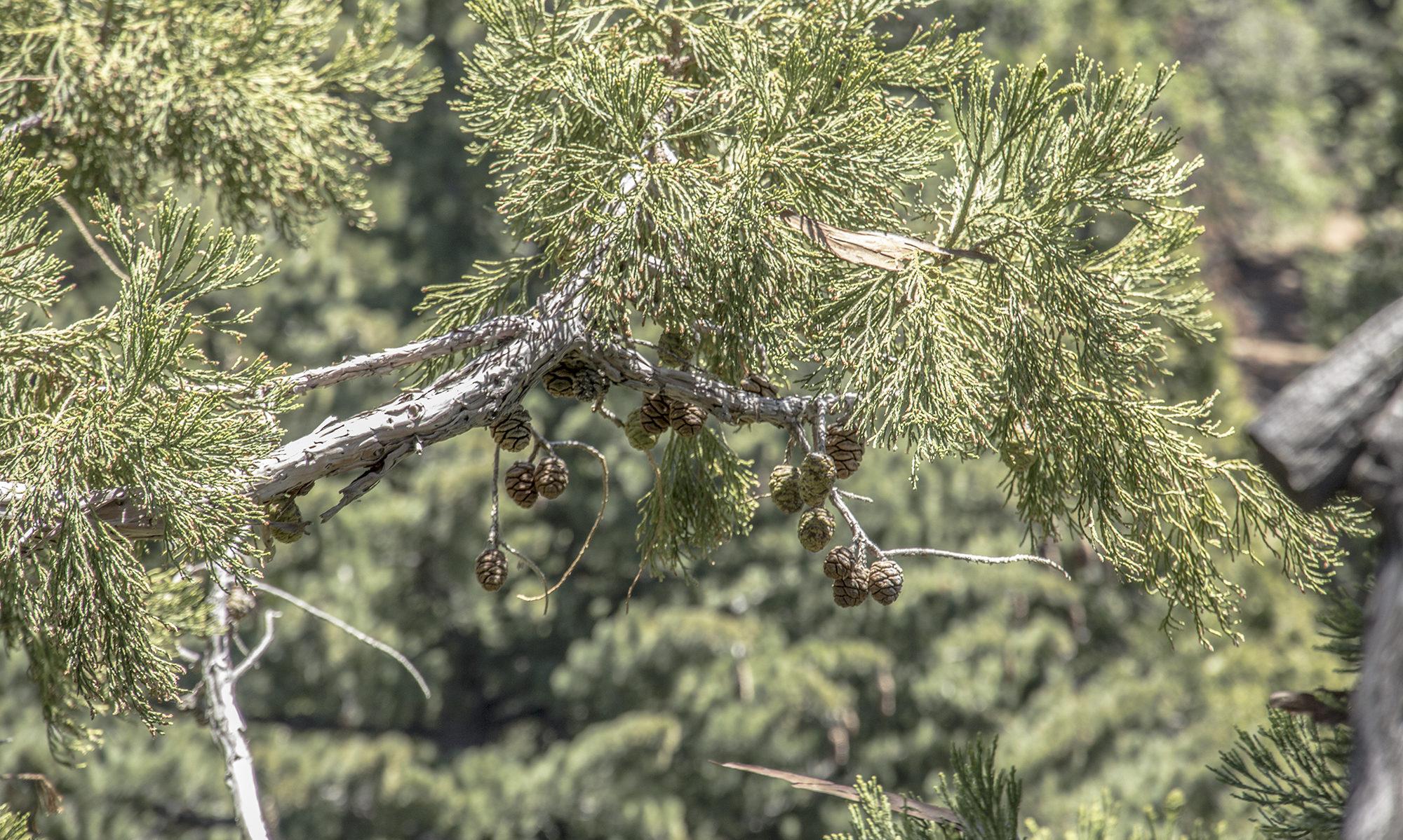 Tree Climbers Rendezvous